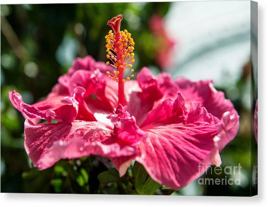 Canvas Print featuring the photograph Flower Closeup by Yew Kwang