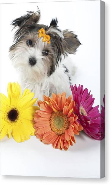 Flower Doggie Canvas Print