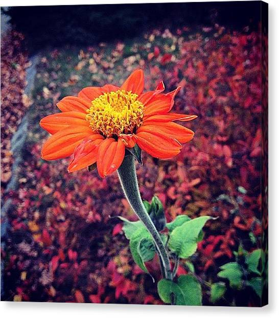 Autumn Leaves Canvas Print - #flower #fall #leafs #autumn #3d by Nate Greenberg