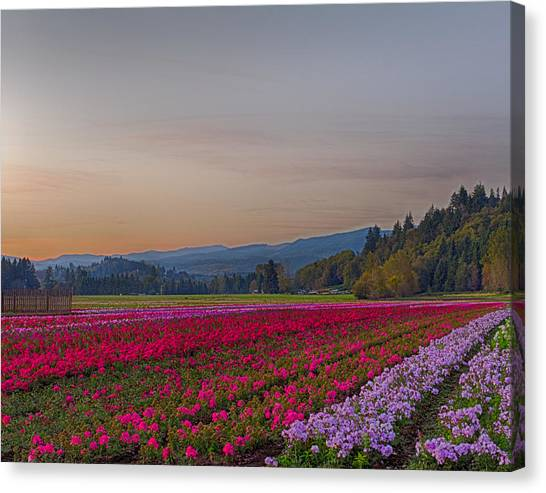 Flower Field At Sunset In A Standard Ratio Canvas Print