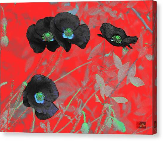 Flower Garden -  Four Black Poppies On Red Canvas Print