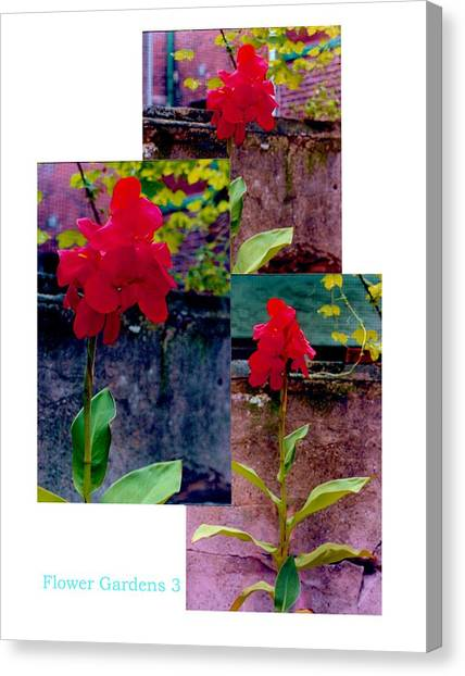 Flower Gardens C Canvas Print