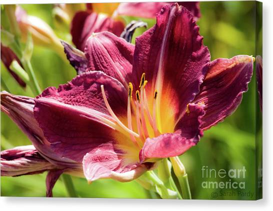 Flower IIi Canvas Print