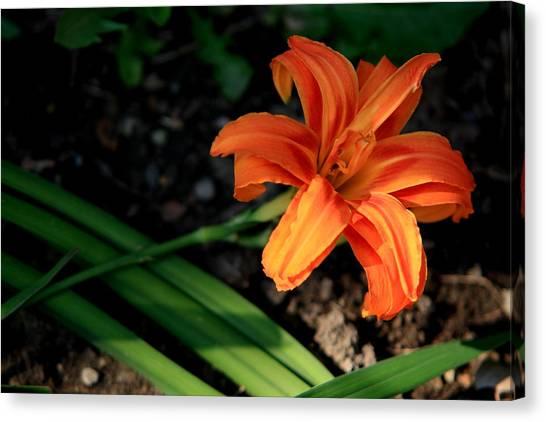 Flower In Backyard Canvas Print