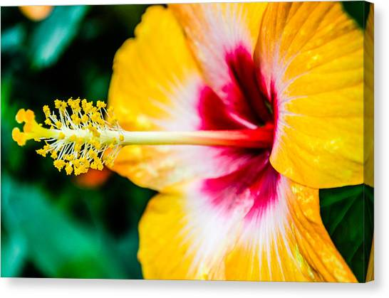 Flower Macro 2 Canvas Print