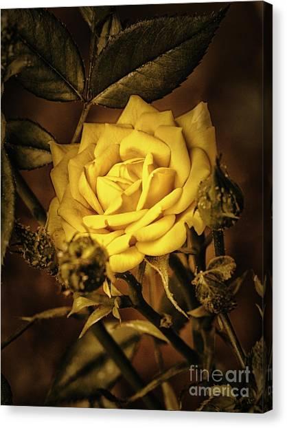 Flower Of Friendship  ... Canvas Print