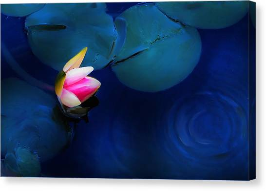 Flower On The Lily Canvas Print by Cary Shapiro