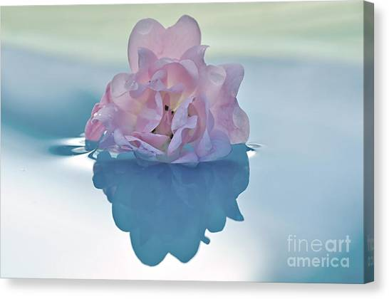 Flower On Water Canvas Print