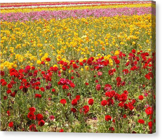 Flower Rainbow Canvas Print