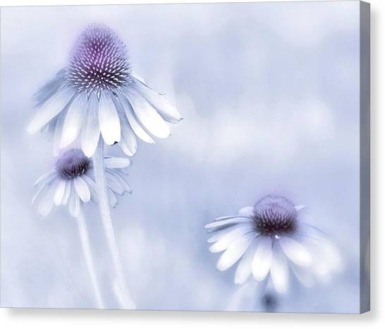 Flower Trio  Canvas Print