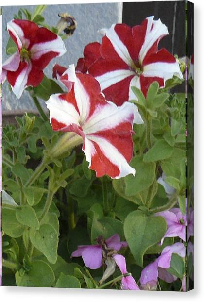 Flower Trios B Canvas Print