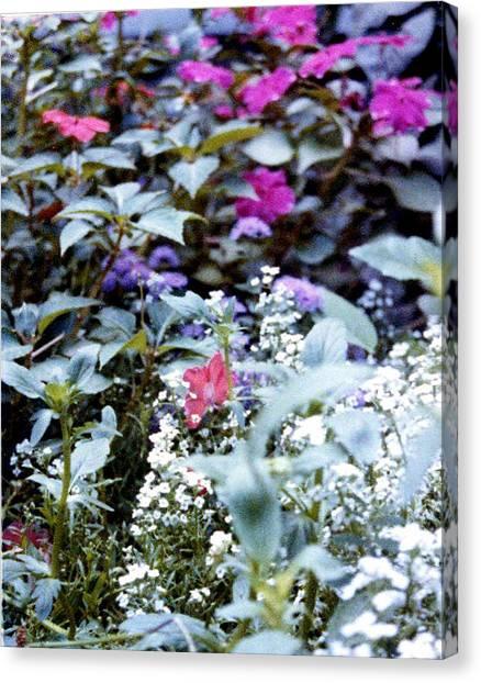 Flower Variety Garden Canvas Print