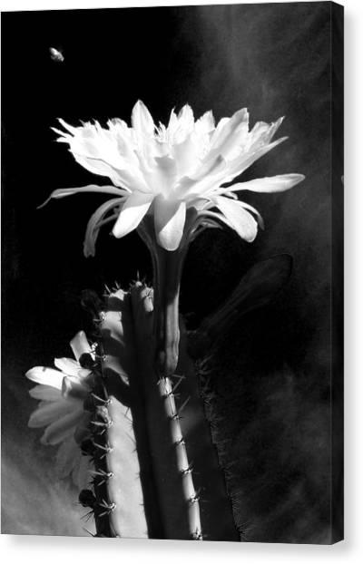 Flowering Cactus 3 Bw Canvas Print