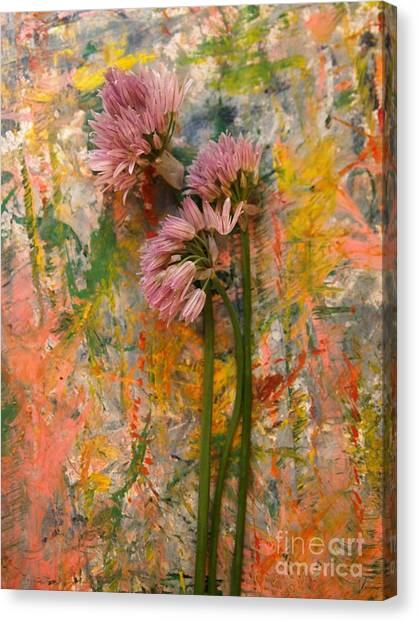 Flowering Garlic Canvas Print