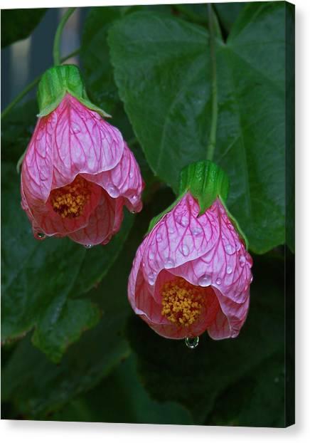 Flowering Maple Canvas Print