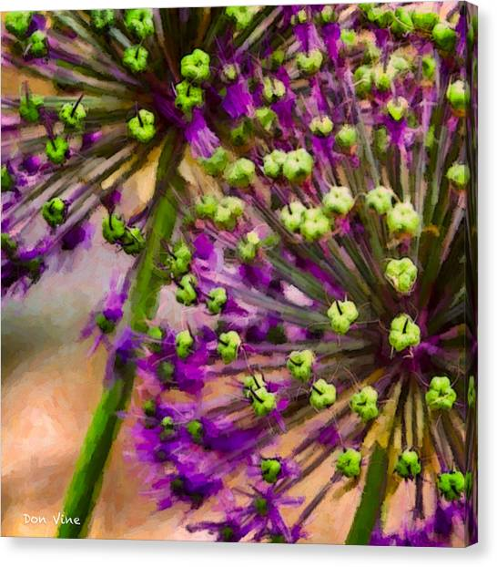 Flowering Onion Canvas Print