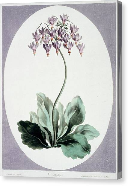 Flowering Plant Canvas Print by Natural History Museum, London/science Photo Library