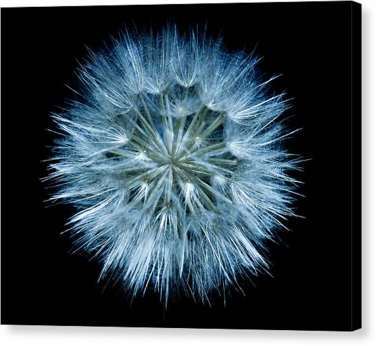Flowering Weed 001 Canvas Print