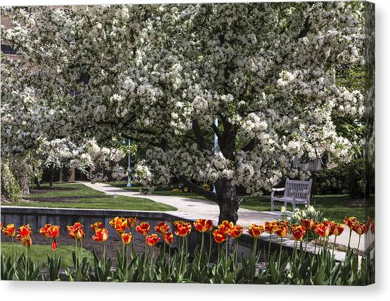 Michigan State University Canvas Print - Flowers And Bench At Michigan State University  by John McGraw