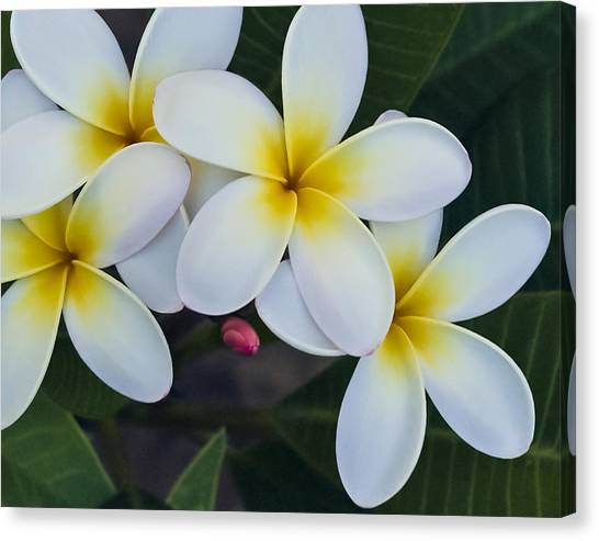 Flowers And Their Bud Canvas Print