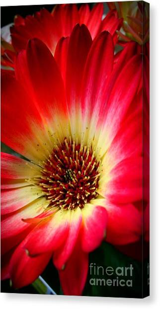 Flowers Are Happiness Canvas Print