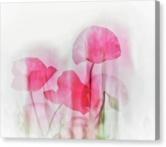 Bloom Canvas Print - Flowers by Cindy Liu
