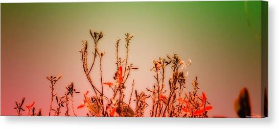 Flowers Dreaming Canvas Print by Vidyalakshmi AC