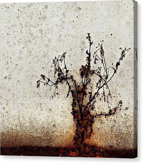 Florals Canvas Print - The Brown Plant by Jason Michael Roust