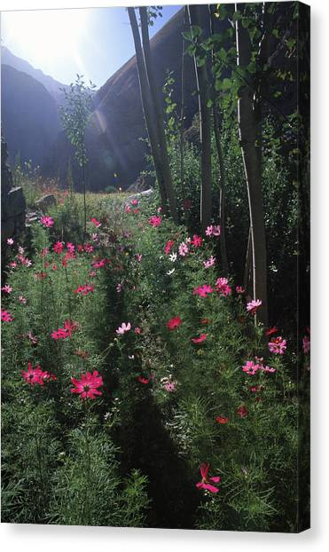 Hindu Kush Canvas Print - Flowers Glow At Dawn N A Farm by Beth Wald