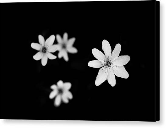 Flowers In Black Canvas Print