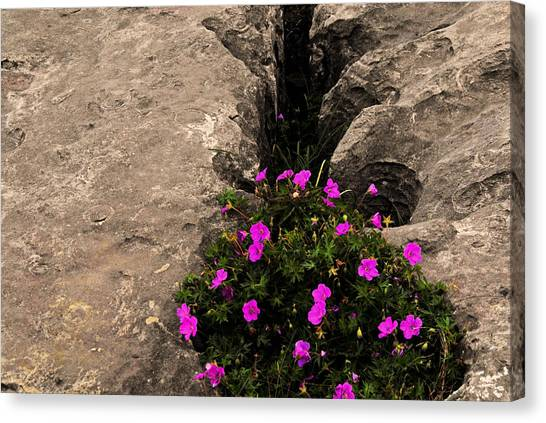 Flowers In Stone Canvas Print
