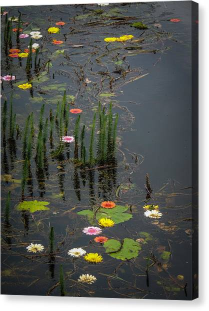 Flowers In The Markree Castle Moat Canvas Print