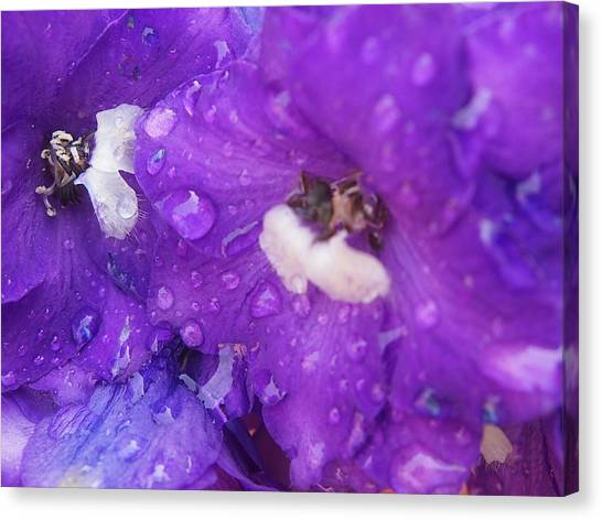 Flowers In The Rain Canvas Print by Chrissy Dame