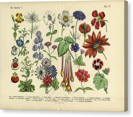 Flowers Of The Garden, Victorian Canvas Print by Bauhaus1000