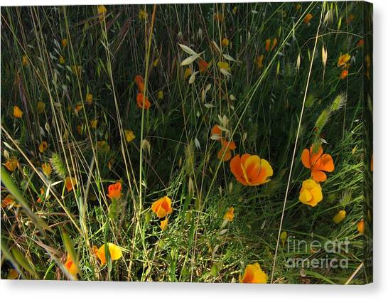 Flowers Of Wild  Canvas Print by Tim Rice
