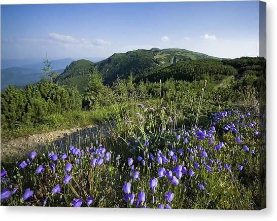 Flowers On Summer Mountain  Canvas Print by Ioan Panaite