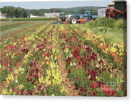 Flowers On The Farm-1 Canvas Print