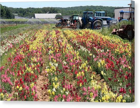 Flowers On The Farm-2 Canvas Print