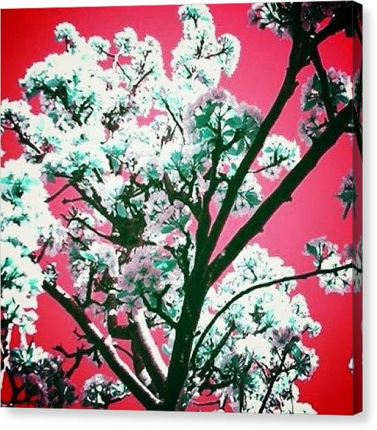 Floss Canvas Print - #flowers #plants #tree #red #edit by Candy Floss Happy