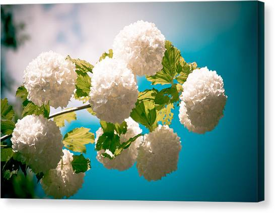 Flowers With Blue Sky Canvas Print
