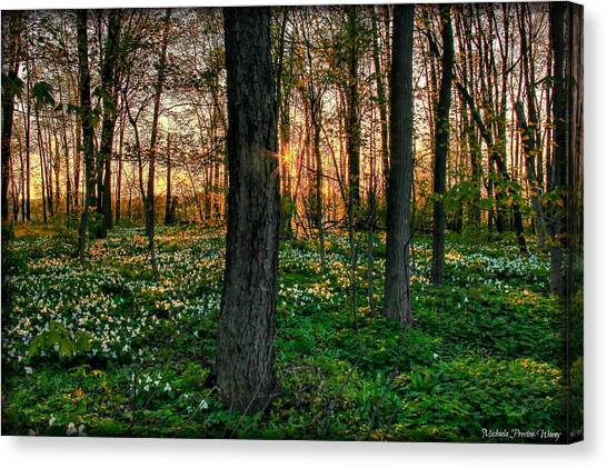 Flowery Sunset Canvas Print