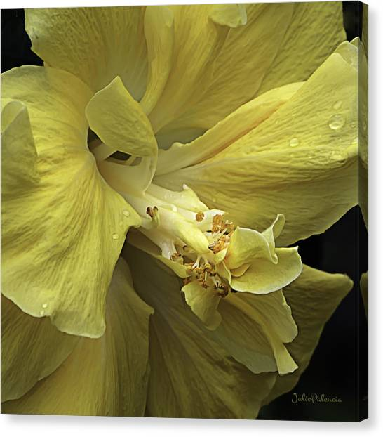 Flowing Petals Of The Chinese Hibiscus Canvas Print