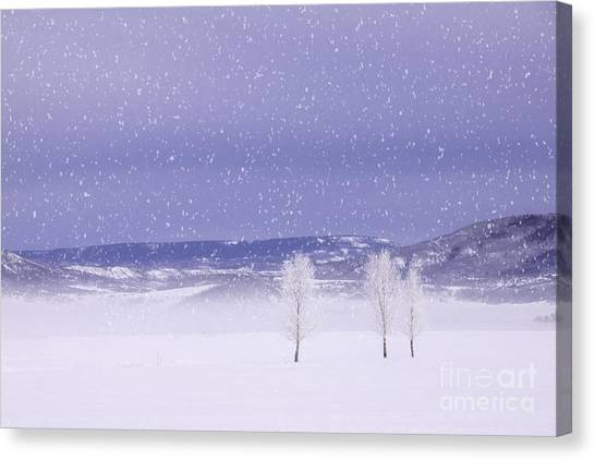 Flurry Trio Canvas Print