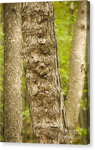 Fluted Tree Canvas Print