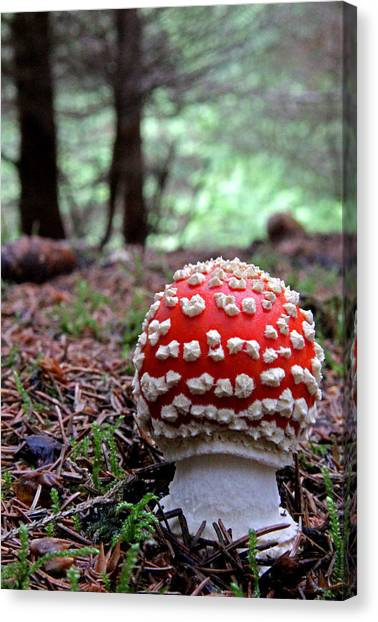 Fly Agaric Emerging Canvas Print