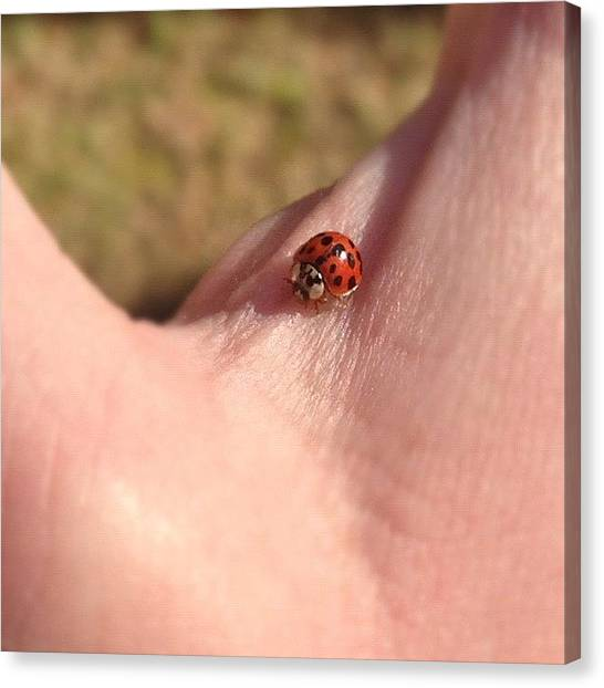 Ladybugs Canvas Print - Fly Away Home #iphone #iphoneonly by Corey Sheehan