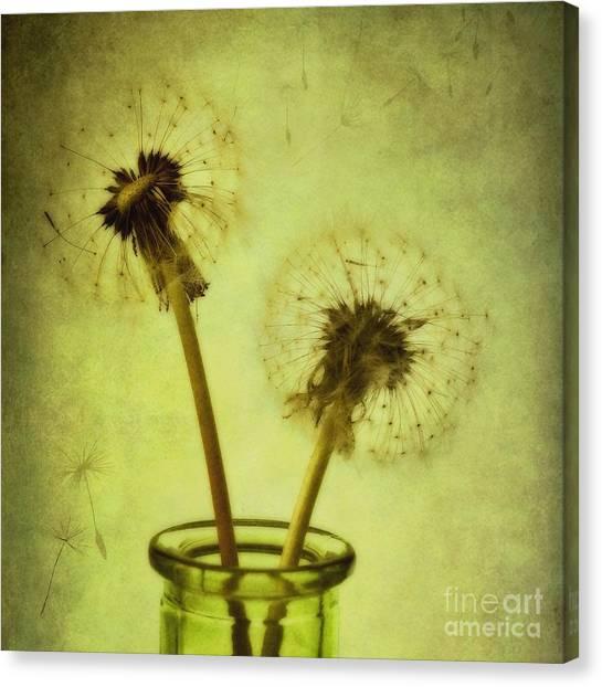 Still Life Canvas Print - Fly Away by Priska Wettstein