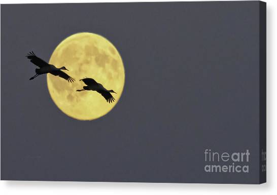 Moonlight Flight Canvas Print