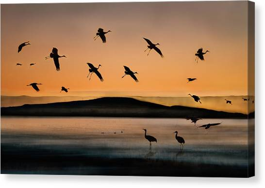 Lake Sunsets Canvas Print - Fly-in At Sunset by Shenshen Dou