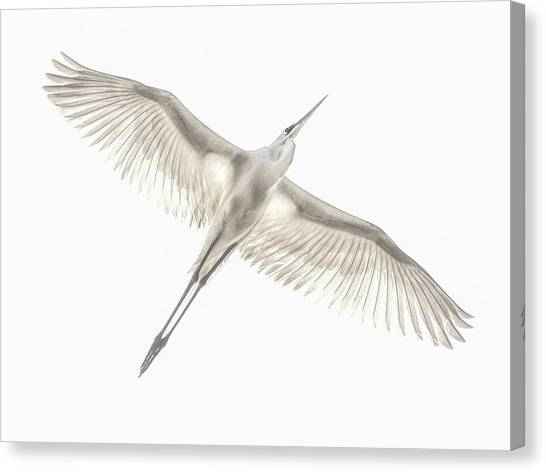 Egret Canvas Print - Fly by Keren Or